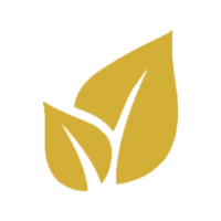 Shisha Kohle kaufen vom Fachmann - naturbelassen